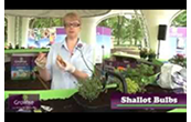 How to grow your own small & portable herbs & salad garden